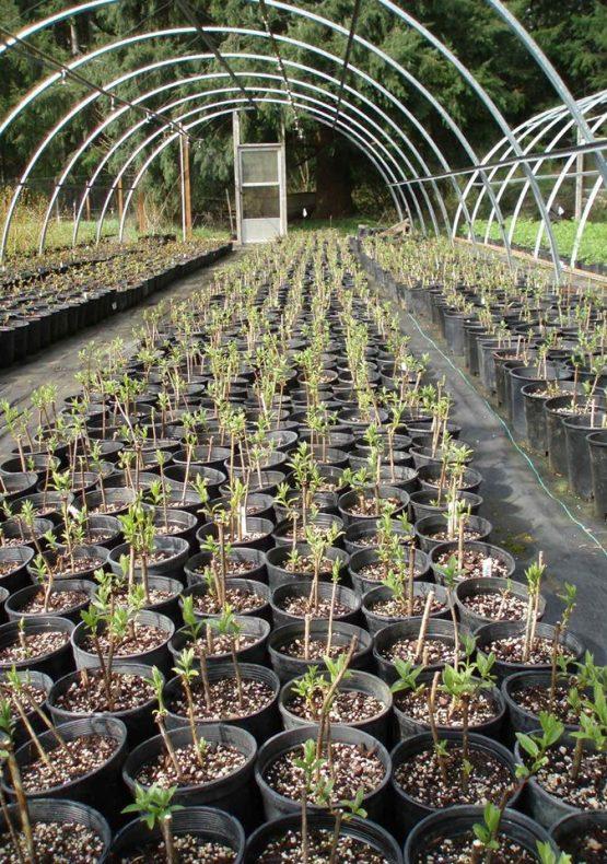 Sound Native Plants, Inc.