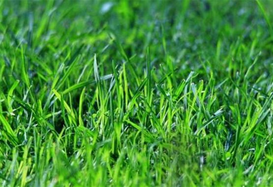 Want an Emerald Green Lawn?